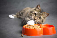 10 Reasons Why Your Cat is Not Eating