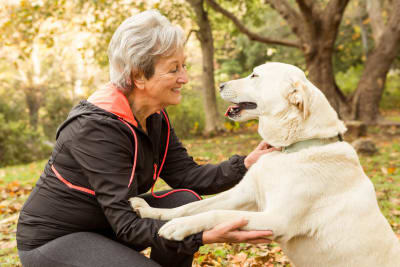 What is the difference between pet insurance and wellness plan?