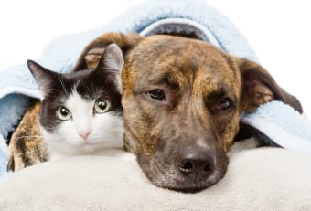 Dog & Cat Vomiting & Diarrhea: What You Should Know & Do