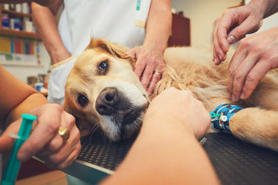 When should I bring my pet to the emergency vet?