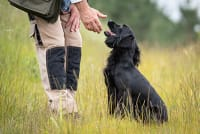 Protecting Your Pet (And Your Family) From Ticks
