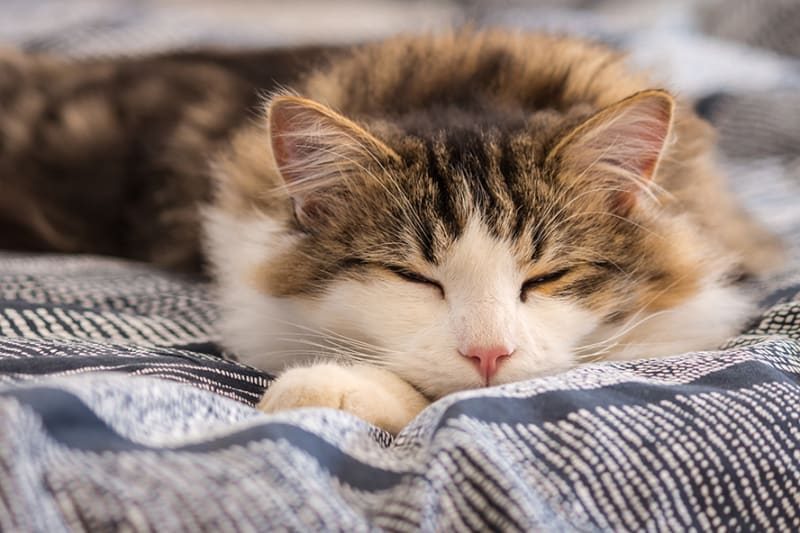 My cat sleeps constantly - how much is too much and when should I worry?