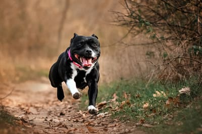 Heartworm Disease & Prevention