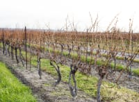 Nova Scotia Wine Grape Hardiness for Early March 2020