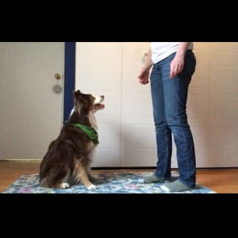 Online Dog Training Programs Available!