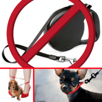 Why Retractable Leashes Are Dangerous at a Veterinary Hospital