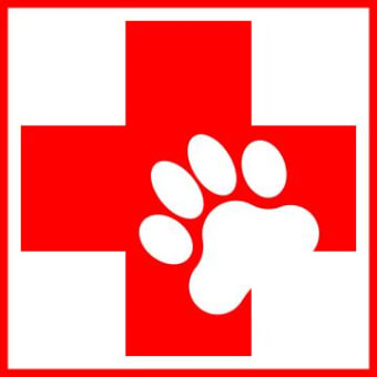 First Aid and CPR for Your Pet