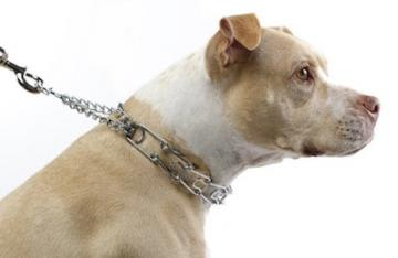 Alternatives to Choke Chains, Prong Collars, and Other Aversive Methods