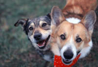 Recommended Wellness Care for Dogs