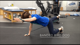 #FitnessFriday Ι Banded Bird Dog