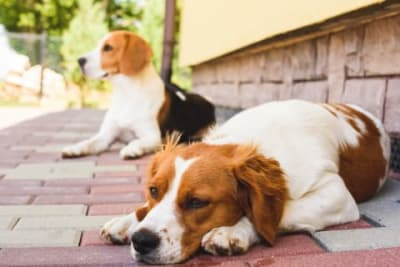Common Serious Dog Illnesses
