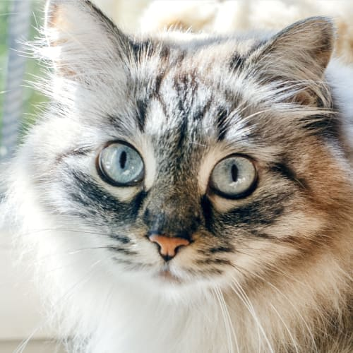 Cat Illnesses That Should Not Be Ignored