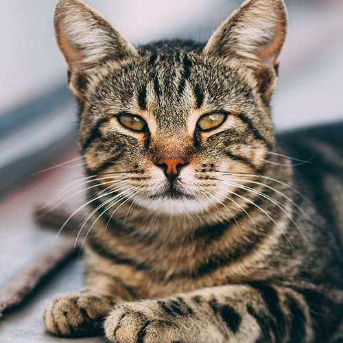 Cat Illnesses that Owners Should Take Seriously