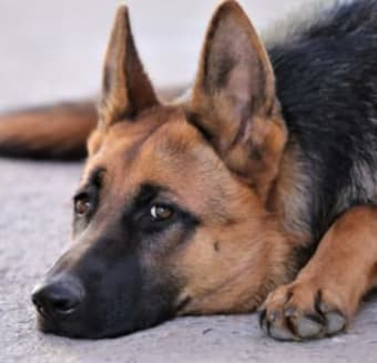 What causes seizures in dogs ?