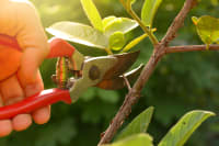 3 Important Benefits of Pruning Shrubs and Trees