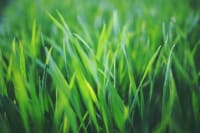 Yard Fertilization: 5 Big Tips for Fertilizing Your Lawn