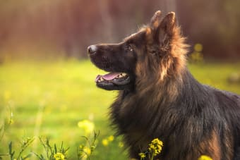 Heat Stroke in Dogs - Symptoms, Causes & Prevention