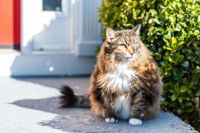 Is Your Cat Overweight? Signs, Symptoms & What to Do