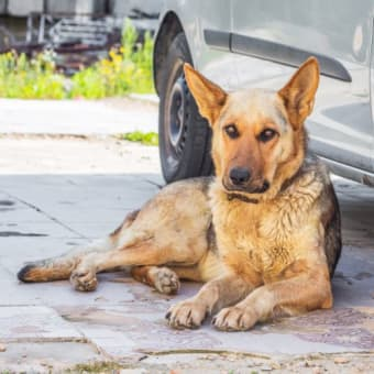 What should I do if my dog drinks antifreeze?
