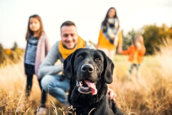 Animal Ownership After Separation: Charting the path forward on caring for family pets