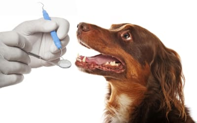 Why should I take my dog for a professional teeth cleaning?