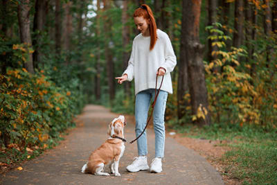 Dog Training Advice for New Pet Parents
