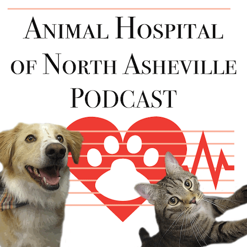 In-Hospital Patient Care: What happens when your pet stays with us: AHNA Podcast
