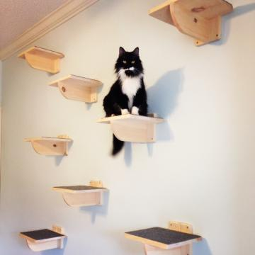 Wall Mounted Cat Perches