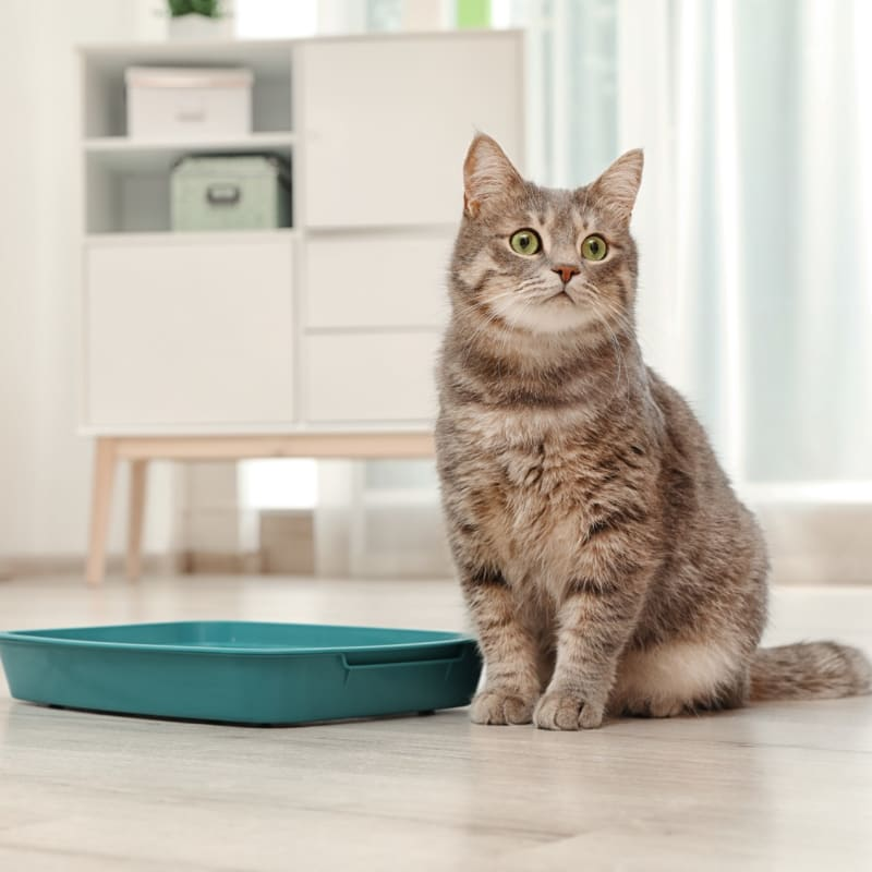 Feline Urinary Tract Disease: What You Need to Know