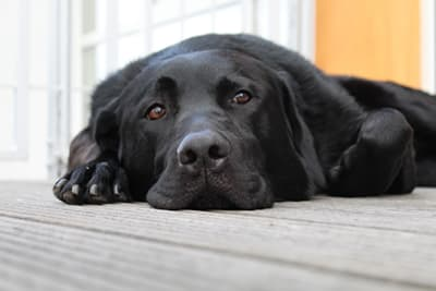 Pneumonia in Dogs - Causes, Symptoms & Treatments