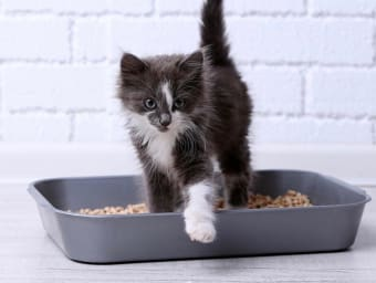 Cat Litter Science: Why To Let Your Cat Choose