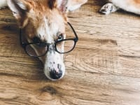 Dog Vision Problems: Blindness Symptoms & How To Manage