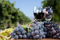 Canada's Napa Valley Seeks Elusive Audience: Canadian Wine Drinkers