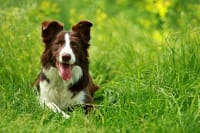 How to Tell if Your Dog Has Heat Stroke
