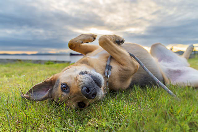 Symptoms of Lyme Disease in Dogs & How Lyme Is Treated