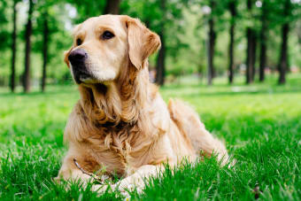 Fluid in the Lungs in Dogs - Causes, Symptoms, and Treatments