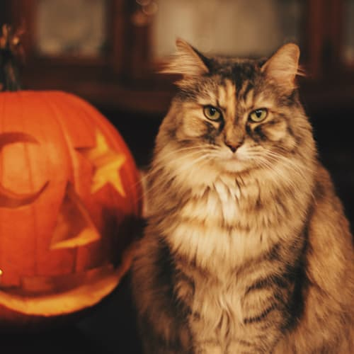 Happy Halloween? For Pets, It Can Be With A Little Practice