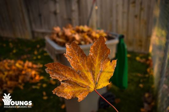 The Best Fall Home Maintenance Tips