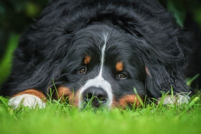 Types, Treatments & Symptoms of Lung Cancer in Dogs