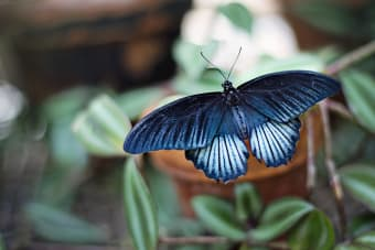 Tips for Planting Beautiful Butterfly Gardens