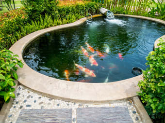 5 Benefits of Adding a Backyard Pond to Your Home