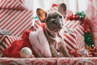 Pets as gifts – good intentions, bad idea