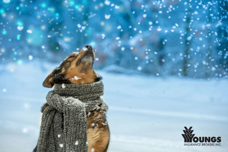 Tips on How You Can Protect Your Pets This Winter