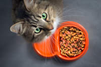 Common Reasons Why Your Cat is Not Eating