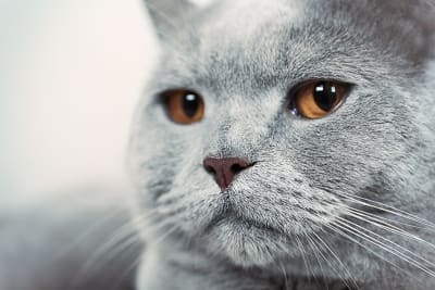 Causes & Symptoms of Hypothyroidism in Cats
