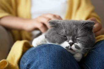 Signs That Your Cat May Be Suffering From Hypothyroidism
