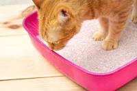 Constipation in Cats: Causes, Symptoms & Treatment