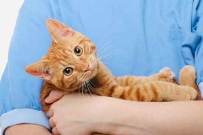 What are some common cat illnesses & symptoms?