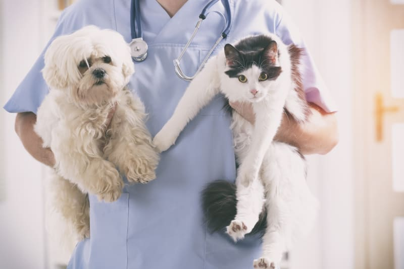 What is the difference between pet insurance and a pet wellness plan?