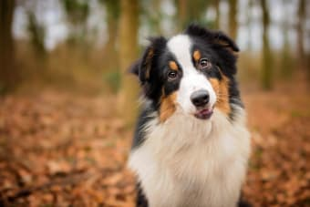 What is ehrlichiosis in dogs?